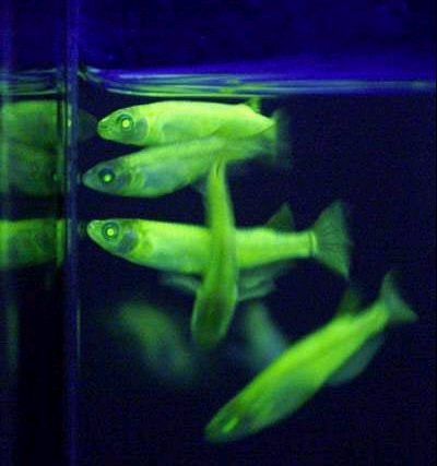 Glo Fish #0: GloFish