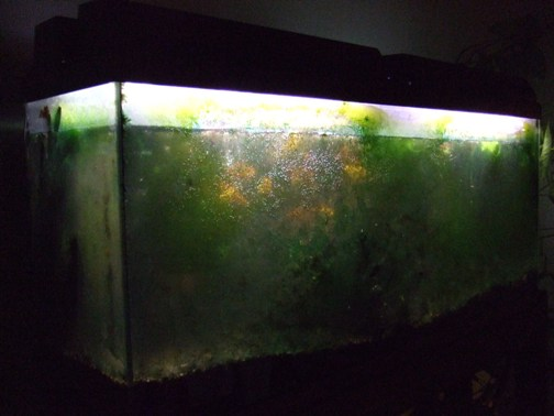 Now a burden for Dirty fish tank