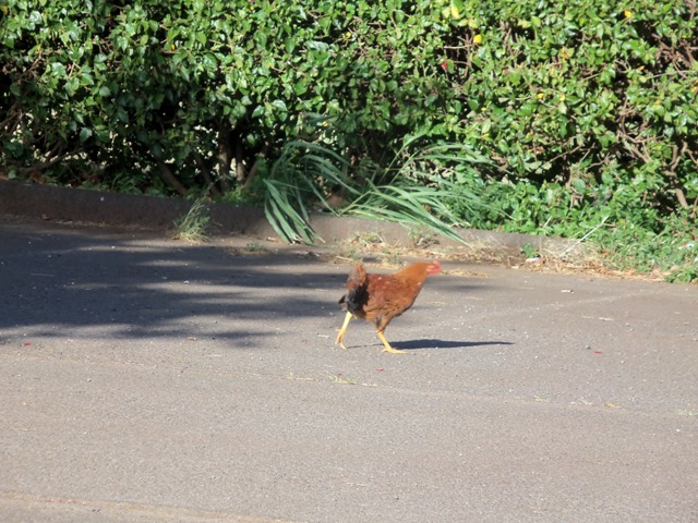 cluck, cluck, cluck...