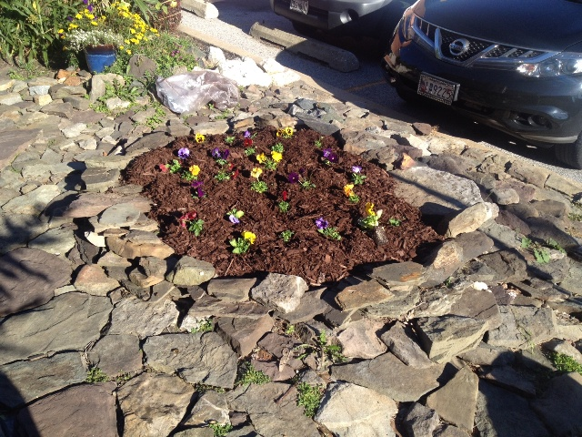 I put a fresh layer of mulch down before planting the pansies.