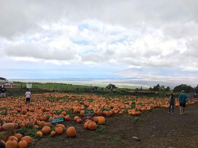 We did not buy a pumpkin.